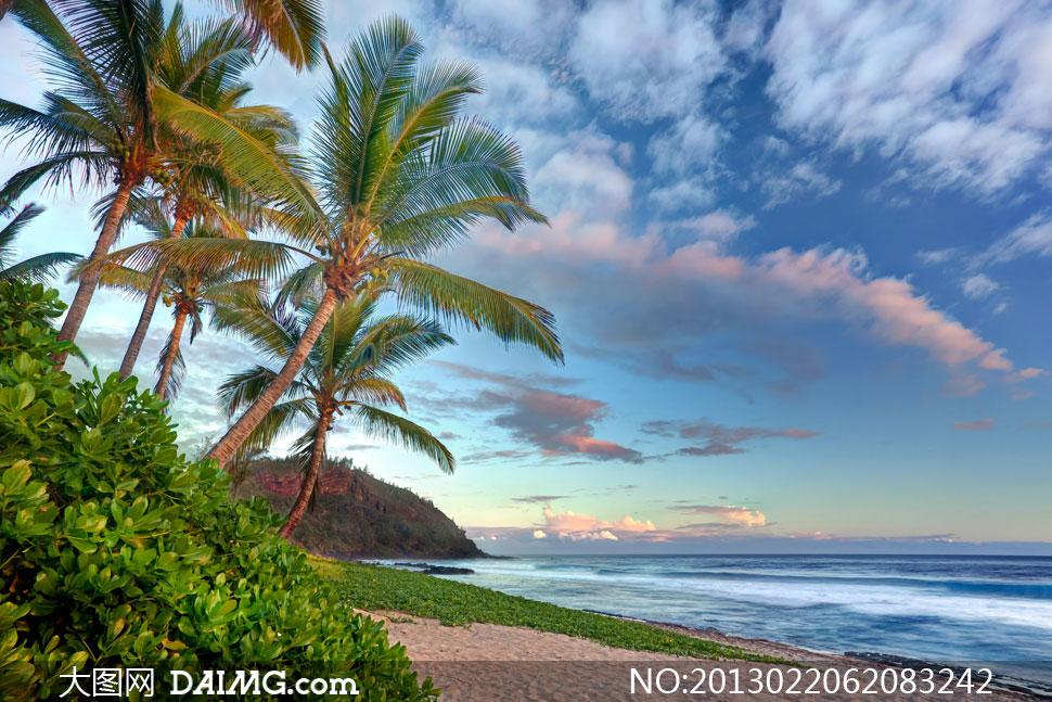 海边椰树背景图片-泡-海边椰子树风景图片,海边椰子树简笔画,椰