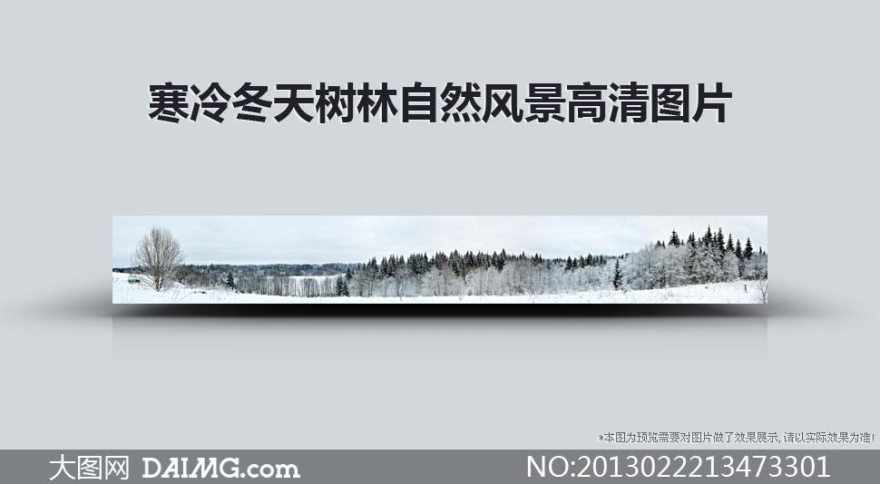 寒冷冬天树林自然风景摄影高清图片