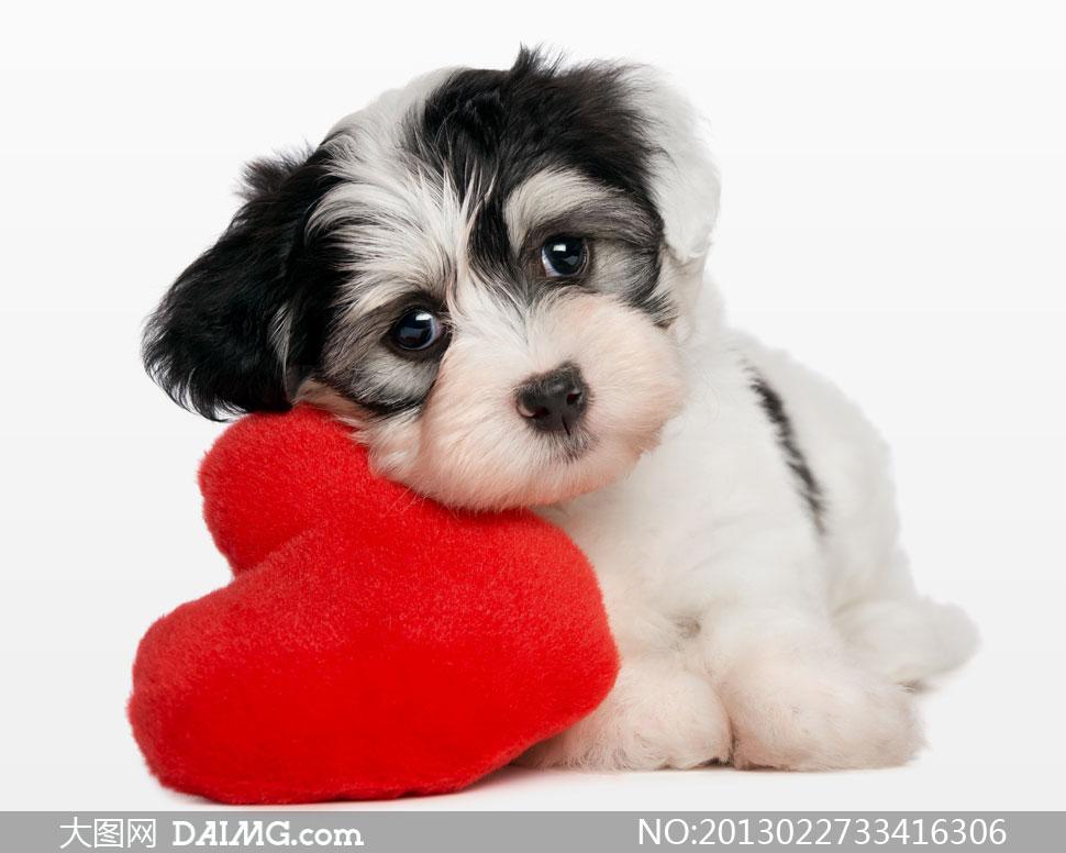 可爱狗狗小狗宠物犬