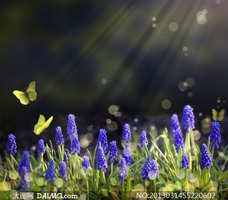 春天野外草丛花卉风景摄影高清图片 - 大图网设计素材