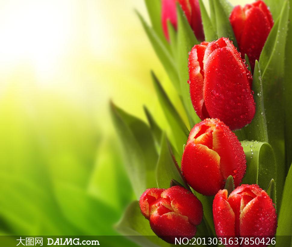 高清摄影大图图片素材近景特写静物鲜花花朵花卉水珠露珠绿叶叶子