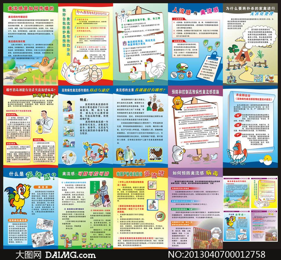 禽流感预防知识展板矢量素材图片