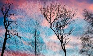 高清晰枯树枝和大树笔刷