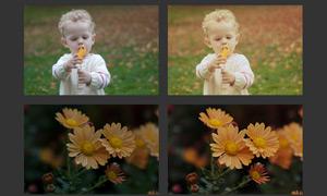 静物照片怀旧黄色调调色动作