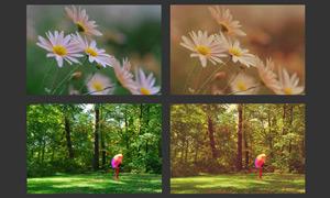 风景照片复古黄色调调色动作