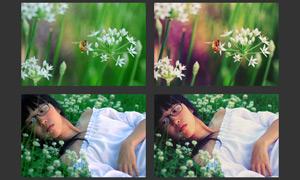 花草照片柔美效果调色动作