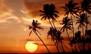 黃昏夕陽云彩椰樹剪影攝影高清圖片