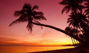黃昏海邊椰樹自然風景攝影高清圖片