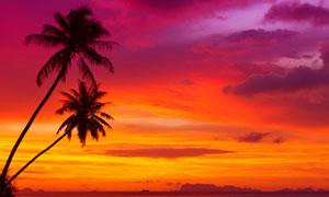 黃昏天空海邊椰樹風景攝影高清圖片