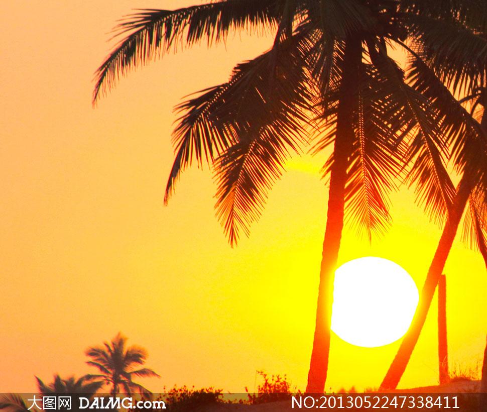 黄昏太阳椰树自然风景摄影高清图片