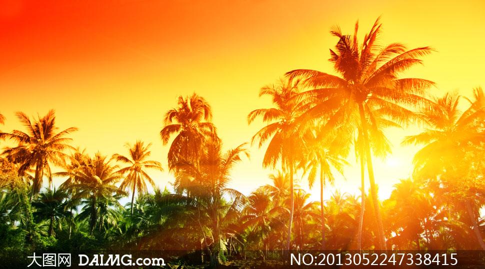 耀眼阳光与椰树林风景摄影高清图片