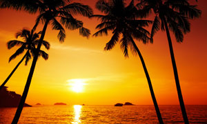 天空夕陽椰樹海面風景攝影高清圖片