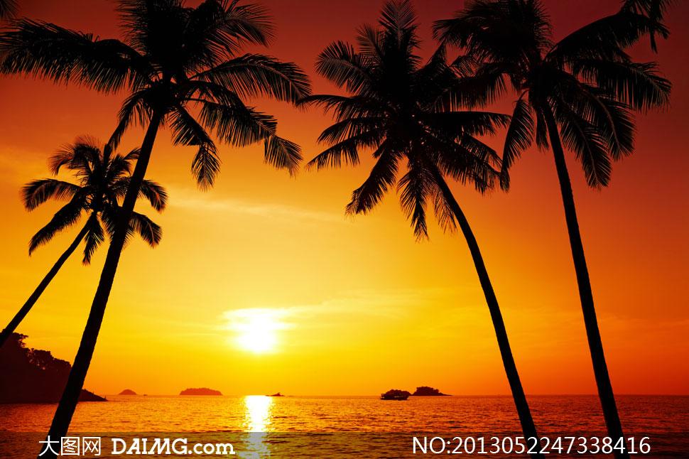 海边椰子树风景图片,椰子树简笔画,椰子树怎么画,椰子树风景图_海南