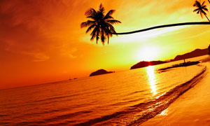 熱帶黃昏海邊椰樹風景攝影高清圖片