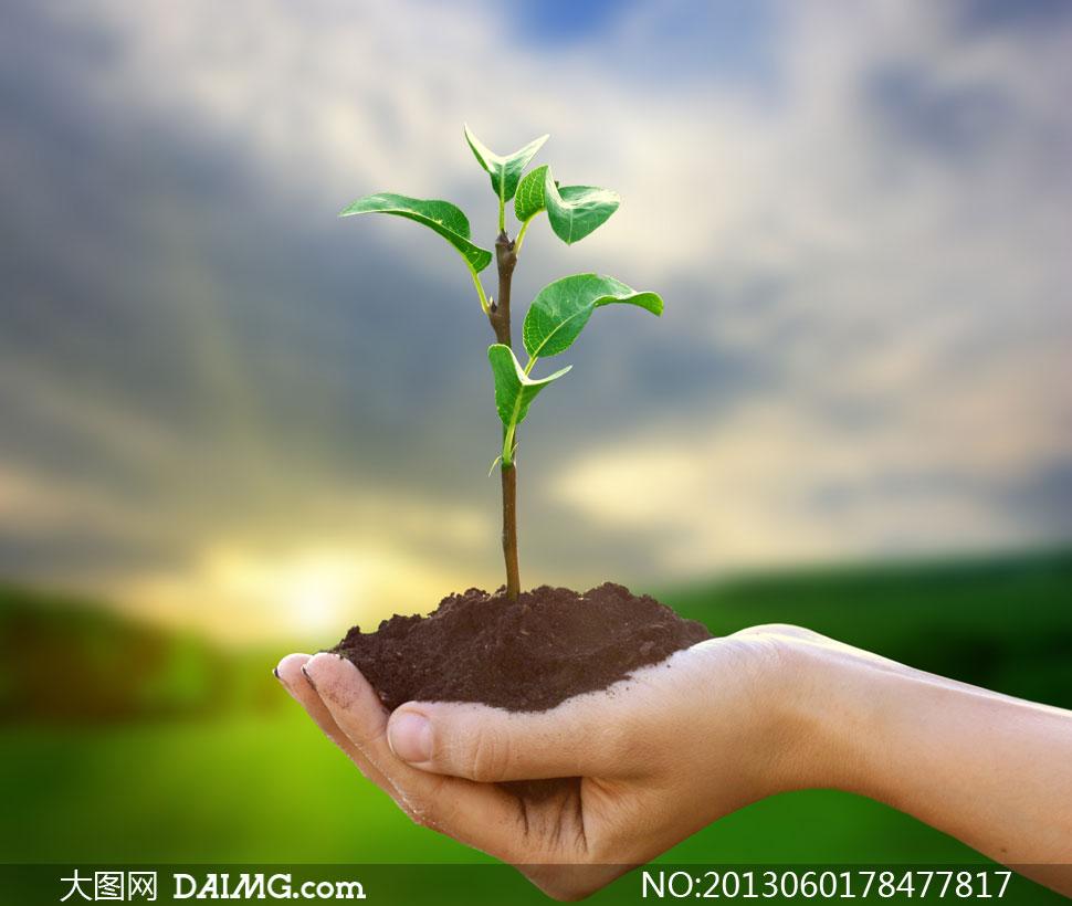 大图首页 高清图片 花卉植物 > 素材信息  素材编号图片