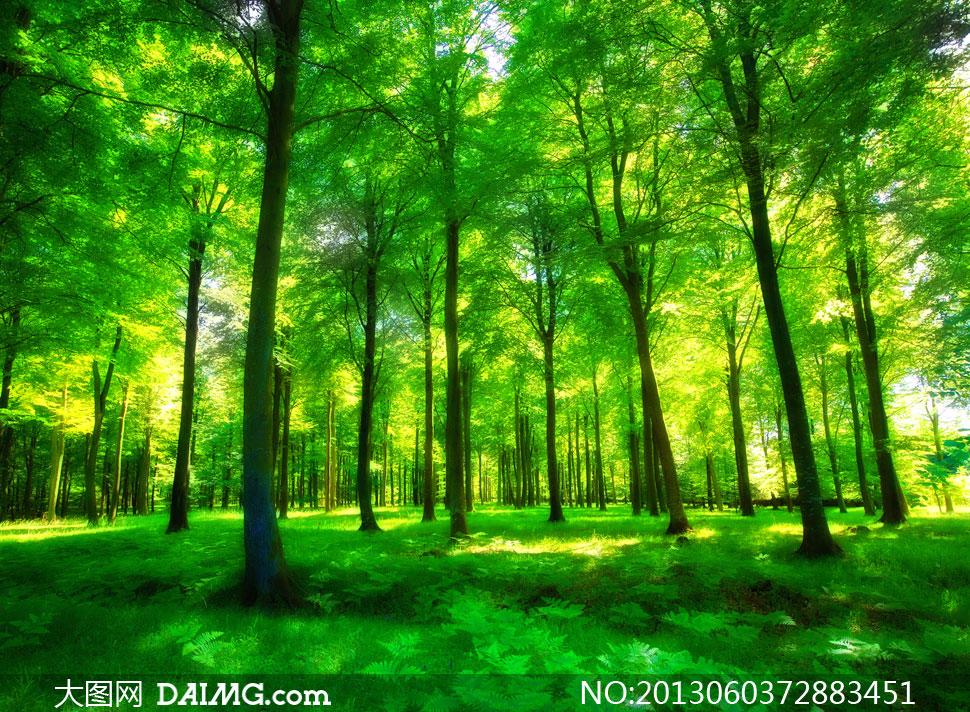 生长茂密的大树林风景摄影高清图片
