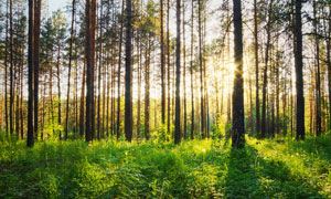 树林阳光杂草自然风光摄影高清图片
