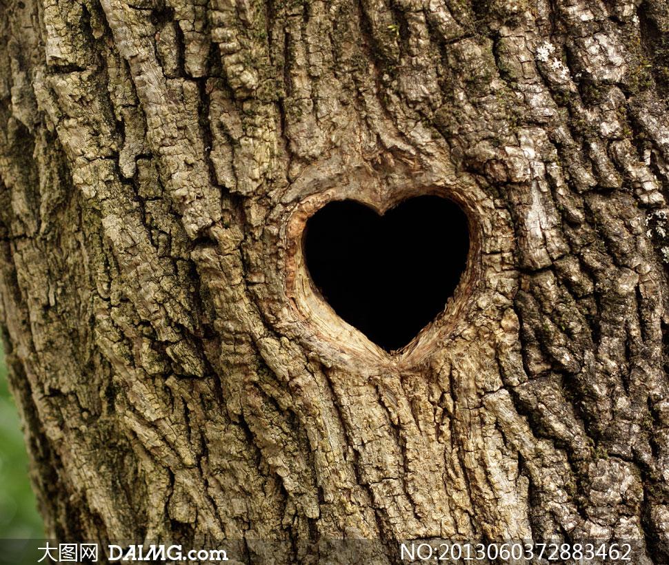 大树上的心形树洞特写摄影高清图片图片