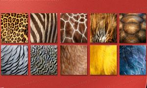 10种动物皮毛纹理填充图案