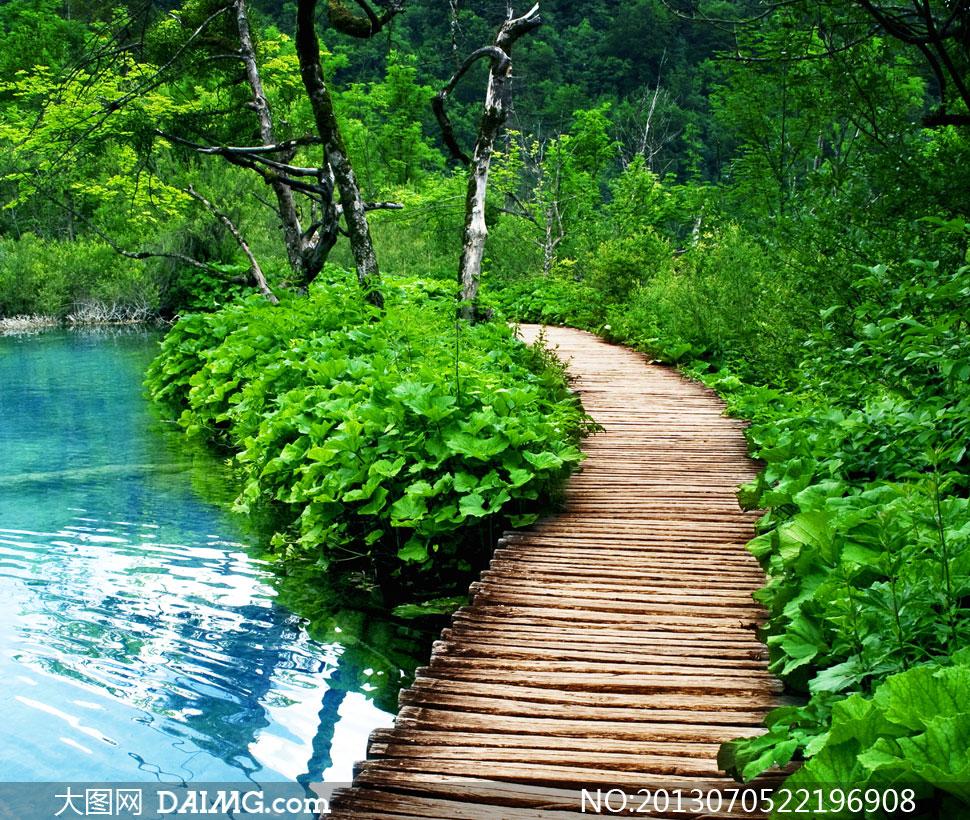 水边树木景区栈道风光摄影高清图片