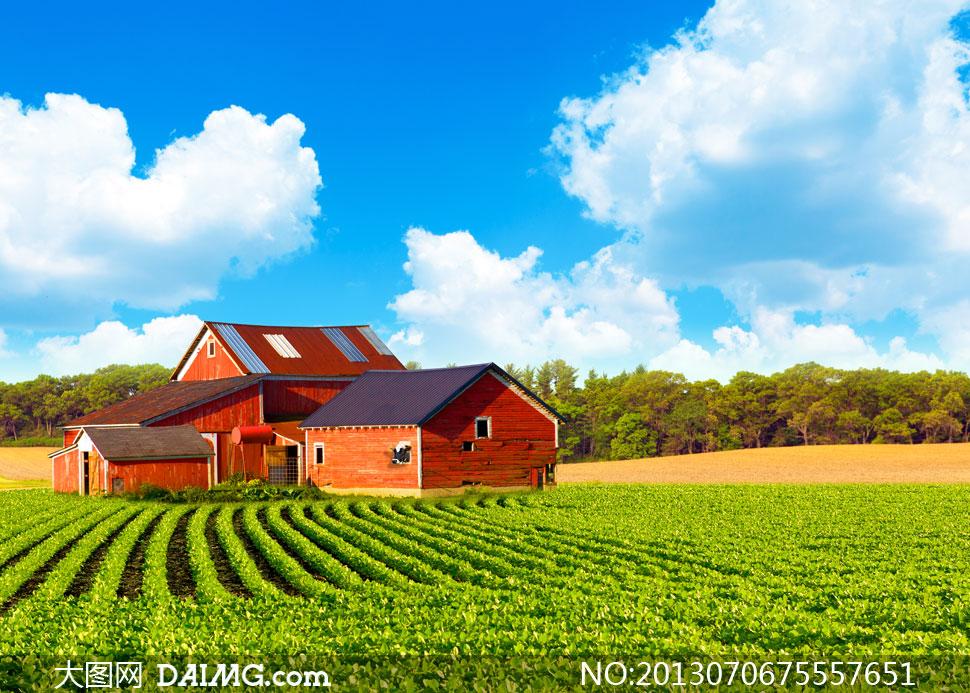 蓝天白云树林与红房子摄影高清图片