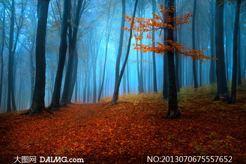 高清摄影大图图片素材风景风光自然雾气树木树林