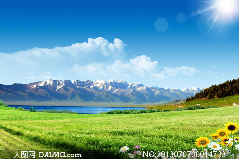 树林花草葵花菊花花卉夏天清爽清凉蒙古西藏青海大自然新疆风景自然