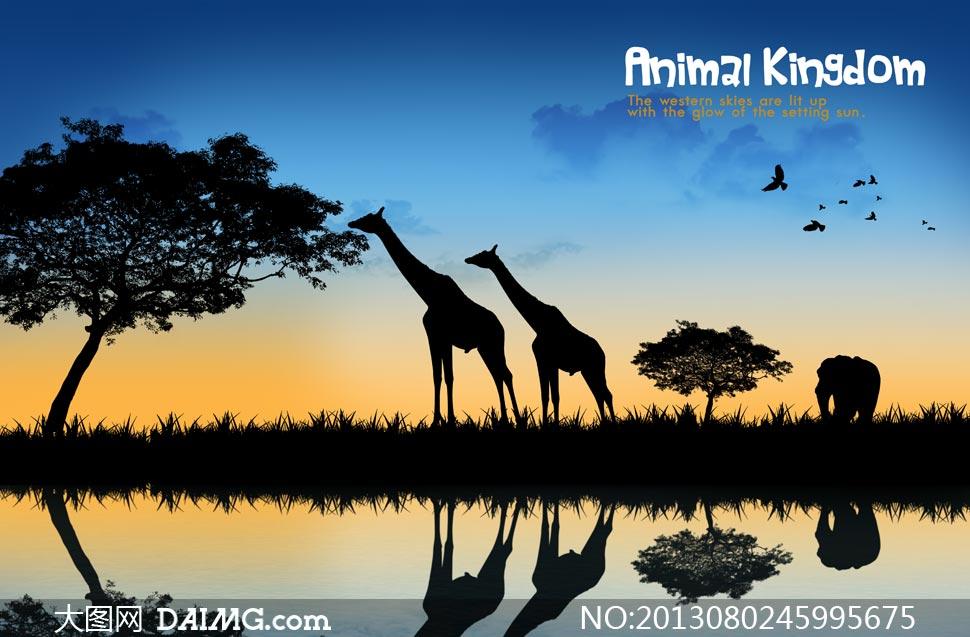 大树动物倒影剪影黄昏傍晚水面长颈鹿天空云彩云层