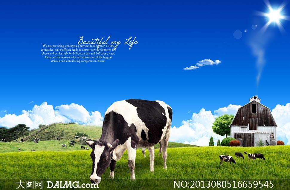 蓝天青青牧场上的奶牛psd分层素材