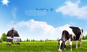 蓝天白云木屋牧场奶牛PSD分层素材