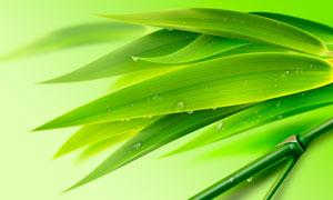 綠色清新的竹葉和露珠PSD分層素材