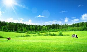 陽光下的綠色草原PSD分層素材