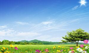 蓝天白云下的大树和草原PSD分层素材