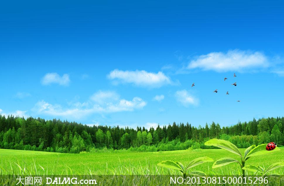 蓝天白云下的森林草地PSD分层素材