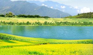 田园油菜花地和湖泊PSD分层素材