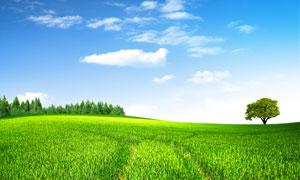 蓝天白云下的绿色农作物PSD分层素材