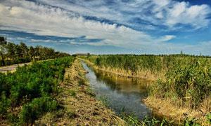 崇明岛湿地公园外景拍摄图片