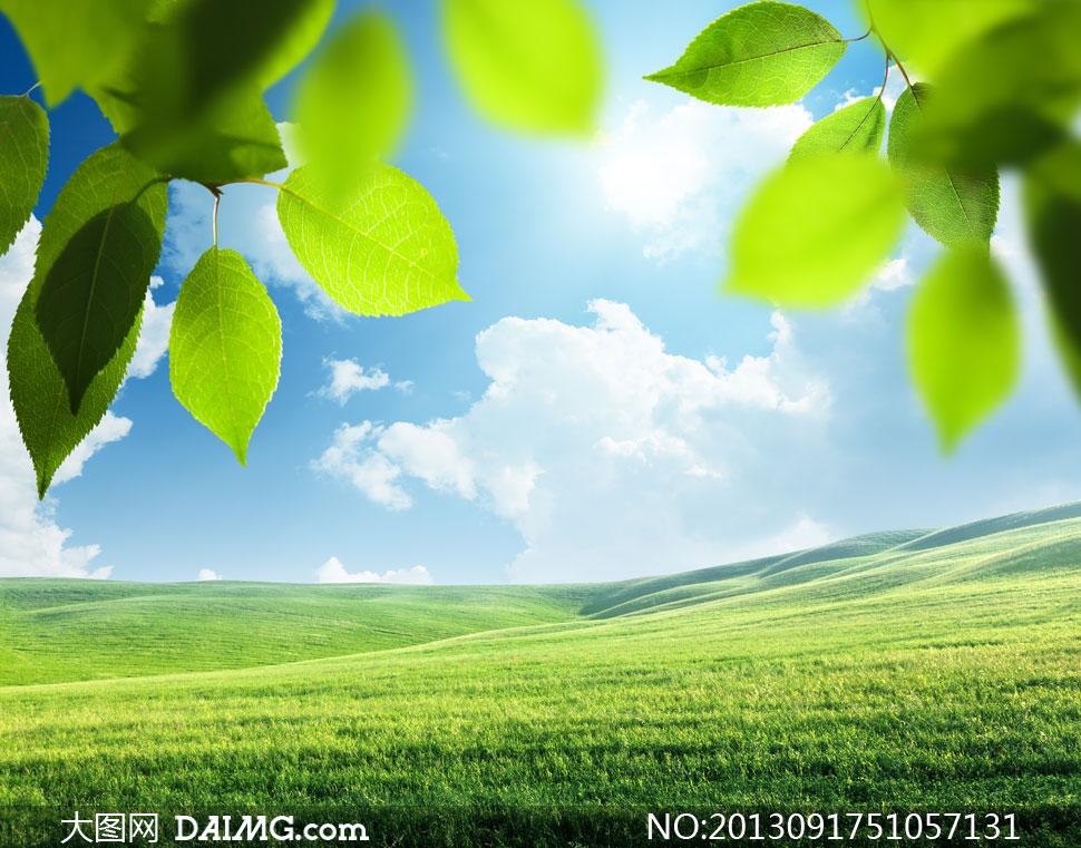 绿叶蓝天白云草地阳光摄影高清图片