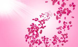 温馨的花瓣装饰元素PSD分层素材