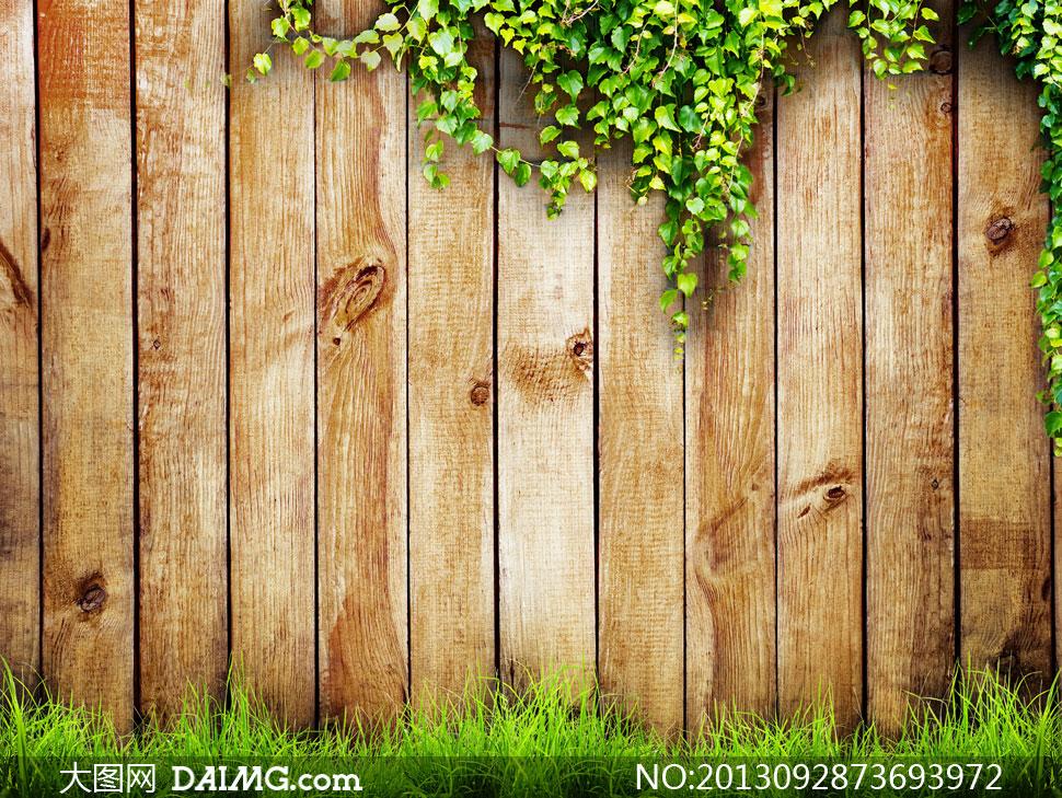 藤蔓植物与木板墙草丛摄影高清图片