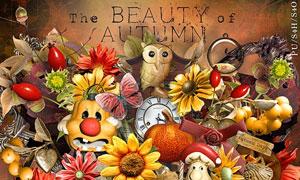花朵南瓜等秋天主题欧美剪贴素材