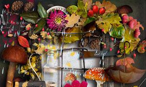 树枝花朵核桃蘑菇等欧美剪贴素材