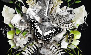 丝带树叶蝴蝶边框等欧美剪贴素材
