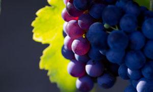 果园里的成熟了的葡萄摄影高清图片
