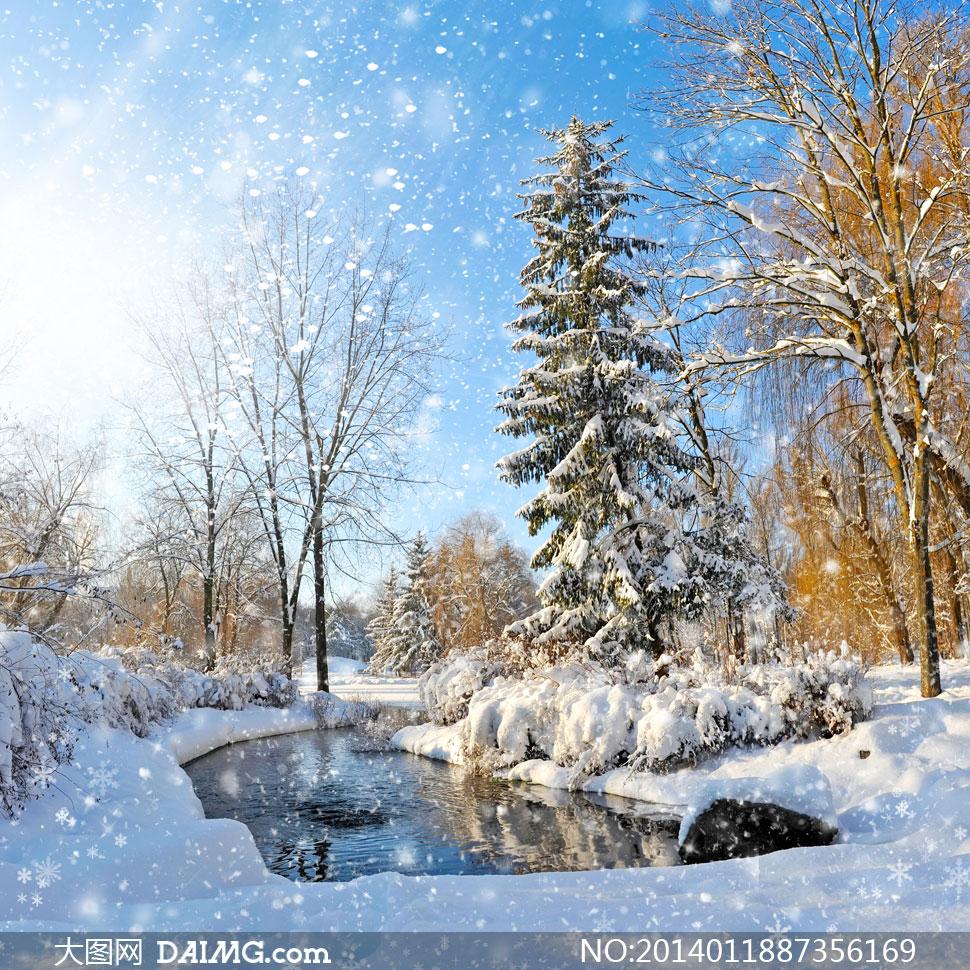 蓝天阳光树木冬天雪景摄影高清图片