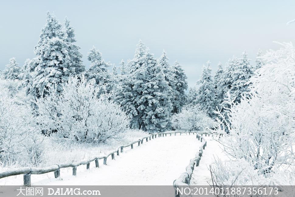 高清摄影大图图片素材风景风光自然冬天白雪雪地积雪冬季雪景树木