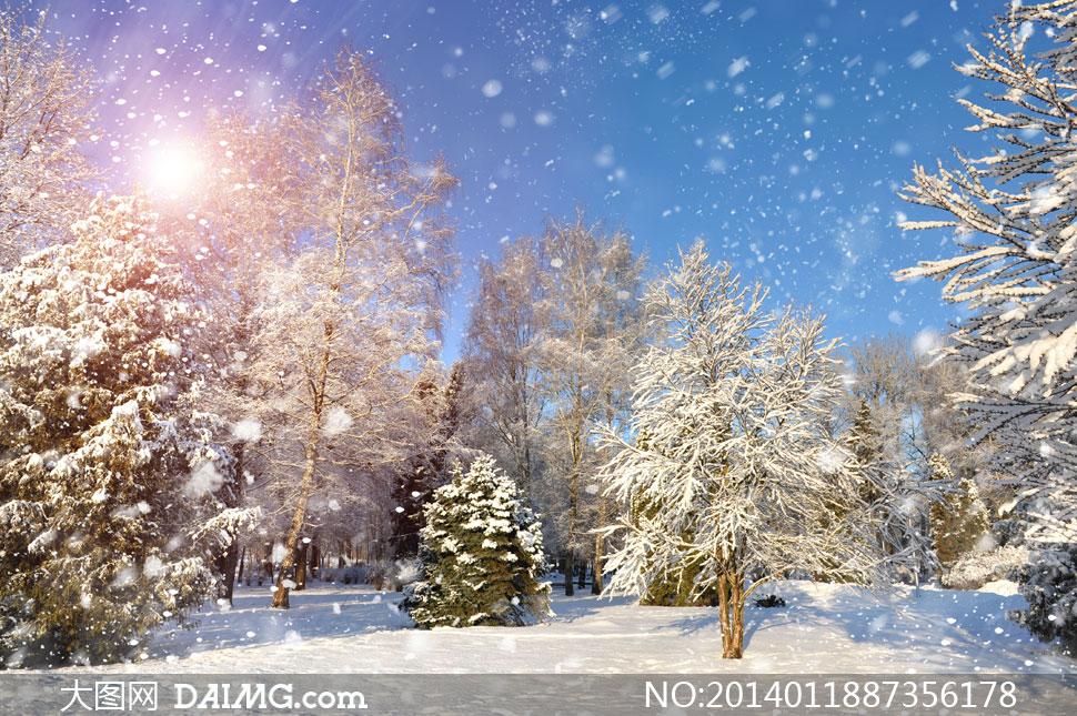寒冷冬天树木雪景风光摄影高清图片