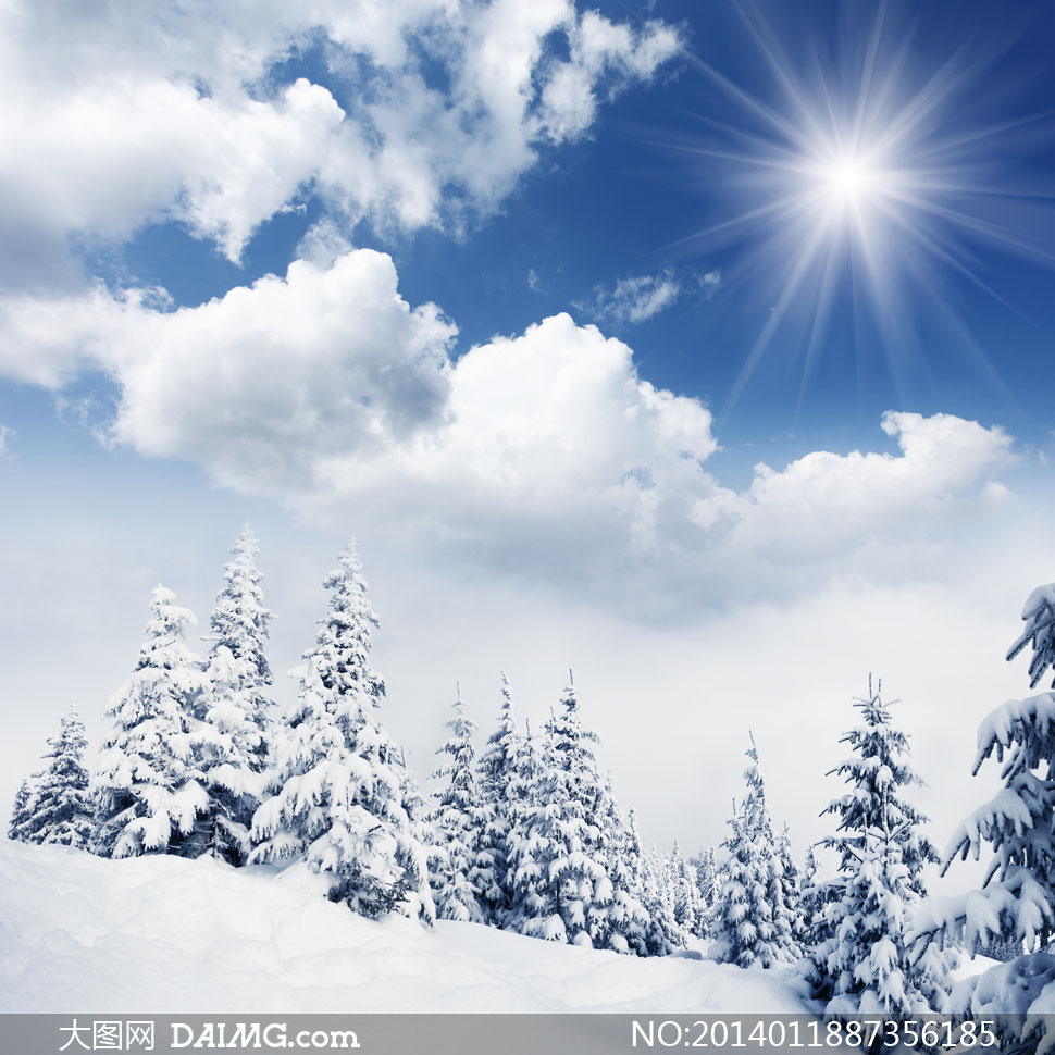 蓝天白云阳光树木雪景摄影高清图片图片