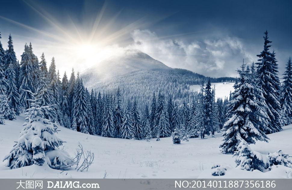 茂密树林冬天雪景风光摄影高清图片图片