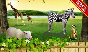 草地上的长颈鹿等影楼摄影背景图片